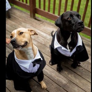 Dapper Dog Tuxedo Costume for wedding/Halloween